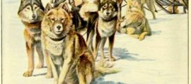 ALASKAN ESKIMO DOGS – Information About Dogs