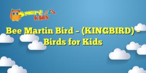 Bee Martin Bird – (KINGBIRD) – Birds for Kids